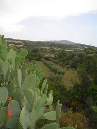 Cerchiara di Calabria casolare con terreno ulivetato vendo
